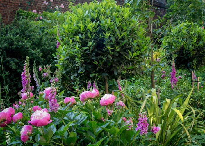 The Charterhouse gardens detail